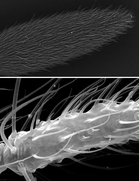 antennae close-up