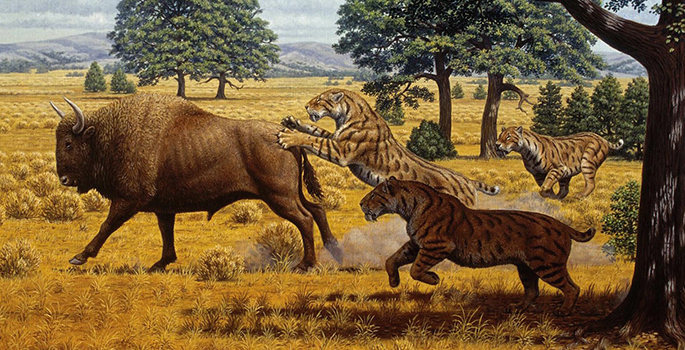 Smilodon and bison