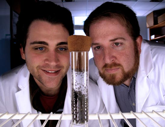 Seth Bordenstein, right, and Robert Brucker examining a bottle filled with Nasonia. (Courtesy of Bordenstein Lab)