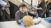 Do brains feel like jello? Free brain event for kids