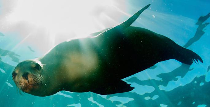 Marine Study Examines Stress Brain >> Scientists Establish First Map Of The Sea Lion Brain Vanderbilt
