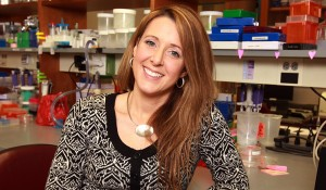 Studies shed new light on breast  cancer development