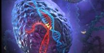 New data mining method reveals cancer-driving genes