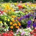 Learn tips and trends for flower gardening Feb. 11
