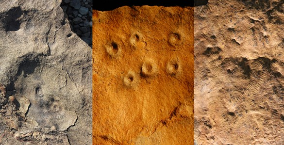 Fossils from Zaris site in Namibia: left, the discs are fossil remains of the holdfast structures that were holdfast structures for an Ediacaran species called aspidella; middle, bumps on the rock surface are the remains of burrows, called conichnus burrows, that were originally inhabited by anemone-like animals that may have fed on Ediacaran larvae; right, odd annulated and ribbon-like fossils that represent mysterious early animals (likely ecosystem engineers) called shaanxilithes. (Simon Darroch / Vanderbilt)