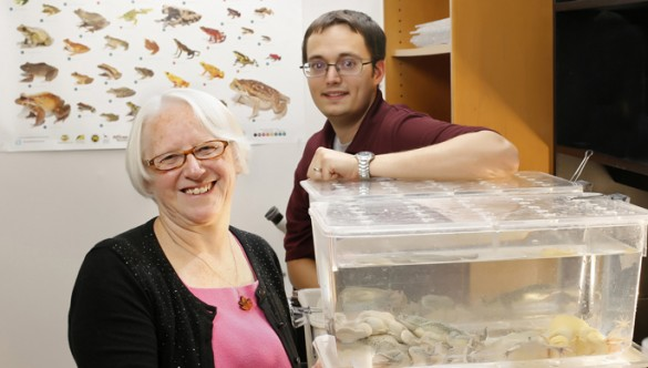 Louise Rollins-Smith, Ph.D., J. Scott Fites and colleagues are studying a toxic factor released by a fungus that disables the amphibian immune response. (photo by Joe Howell)