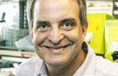 Study seeks to reverse precancerous stomach lesions