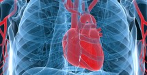 Study finds few meet criteria for healthy cardiovascular lifestyle