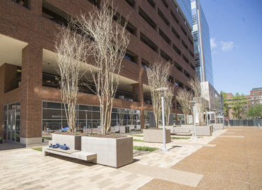The Medical Center campus looked different yet again as the latest phase of the plaza renovation, the space in front of Light Hall, reopened for pedestrian traffic last spring. (photo by John Russell)