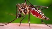 Vanderbilt Vaccine Center joins global task force to address urgent viral threat