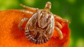 Doctors see rise in tick-borne illnesses and other insect-related infections