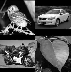 Some of the images used in the object recognition test. (Gauthier Lab)