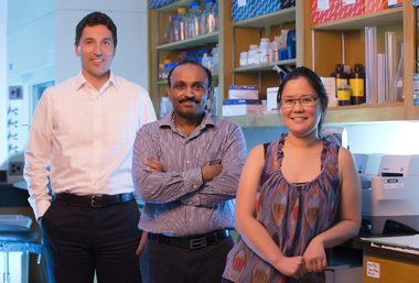 From left, Eric Sebzda, Ph.D., Sudheer Pabbisetty, Ph.D., Whitney Rabacal, Ph.D., and colleagues are studying a transcription factor's role in potentially regulating autoimmunity. (photo by Joe Howell)