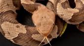 Vanderbilt expert offers advice on snake bites