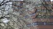 Steps to allergy relief as tree pollen season begins