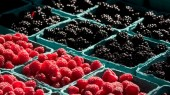 High school students turn blackberries into solar cells