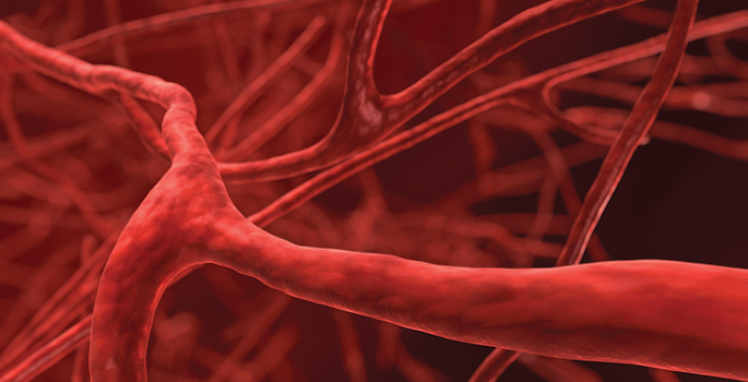 close up of blood vessels