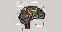 Brain circuitry in psychosis