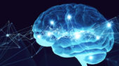 Inflammation in genetic epilepsy