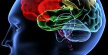 Innovative Vanderbilt joint degree combines neuroscience and law