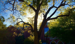 Our favorite #vandygram photos of the week
