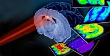 Grant bolsters molecular imaging resource