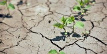 VU's improved drought-measuring tool could help shape policy