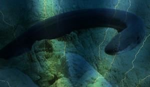 VUCast: Shocking Eels!