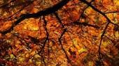 Vandy Walks: 'Ghost Trees and Urban Legends' Oct. 31
