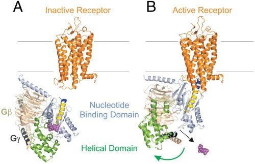 g protein binding