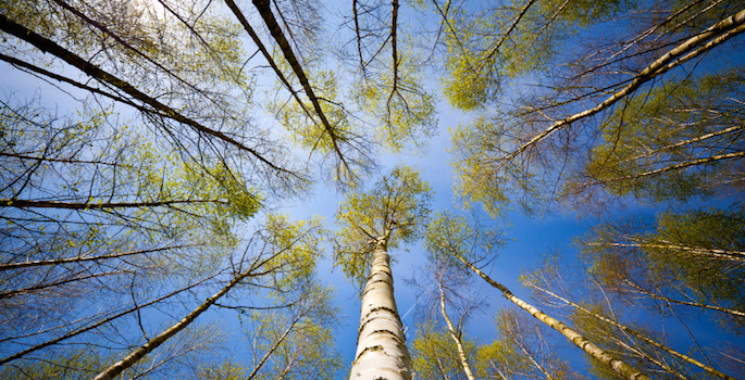 happy trees seeking the sun