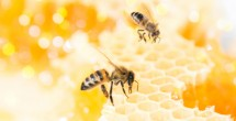 Honeybee Algorithm receives Golden Goose Award