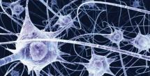 Blocking neuroblastoma cell growth