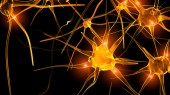 Obesity sends immune cells to the brain