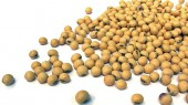 Soy foods not a risk for breast cancer survivors
