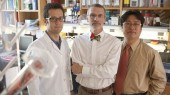 Protein family key to aging linked to suppressing tumors