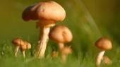 A few fungi factoids