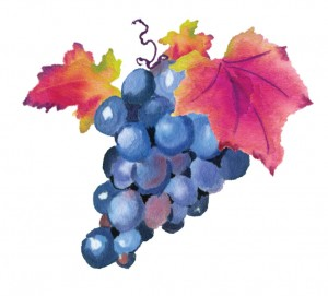 Expertise-grapes