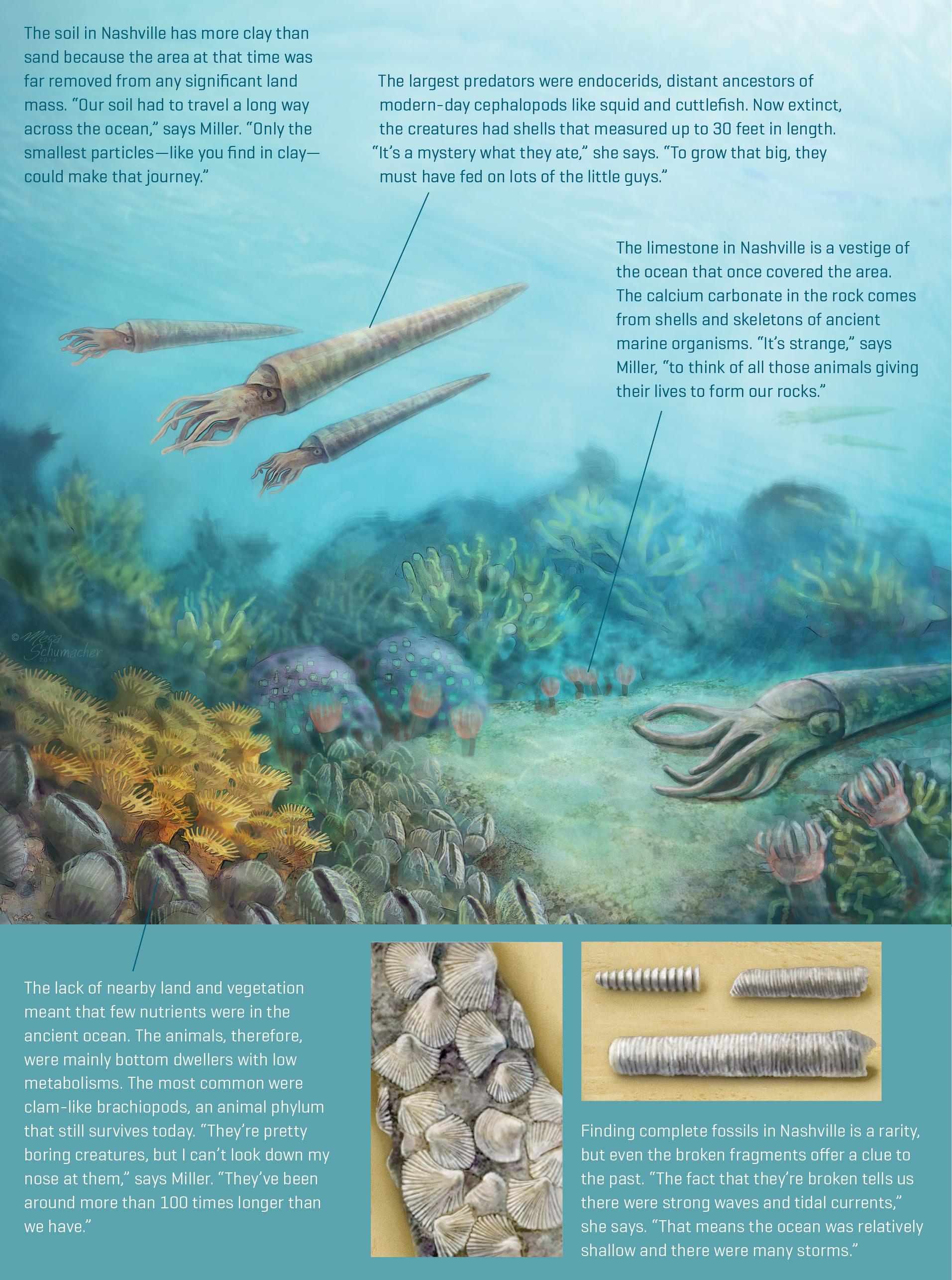 Illustration of Nashville 450 million years ago