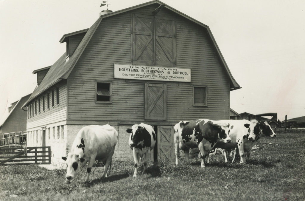 Peabody College's Knapp Farm featured a dairy barn housing what was likely the first herd of purebred Holstein cows in the South. Vanderbilt Special Collections and University Archives.