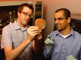 Brian Bachmann and graduate student Ahmad Al-Mestarihi discuss one of the cultures of cave bacteria that they have grown in the lab. (Photo credit: John Russell, Vanderbilt University)