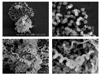 Electron microscope images of some of the cave microorganisms that the Bachmann group.